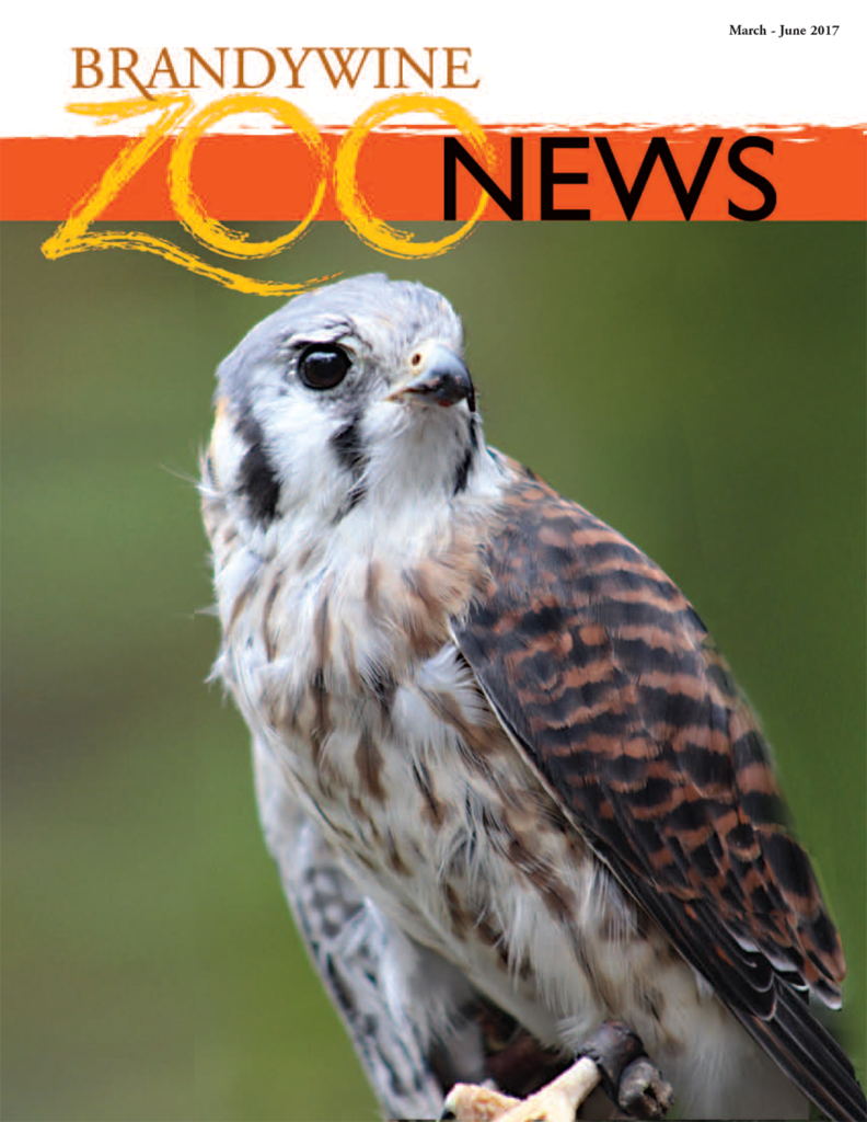zoo-news-spring