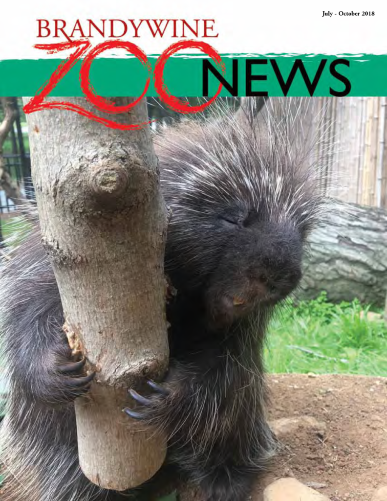 Brandywine Zoo News July October 2018