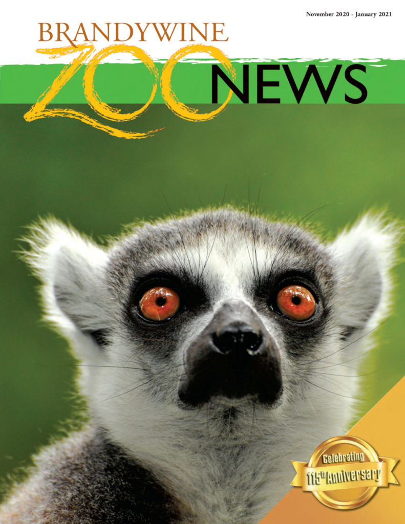 Brandywine Zoo News - October 2020 - January 2021